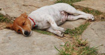 fotonomaden-kuba-hund