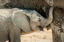fotonomaden-portfolio-elefantenjunges