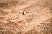 fotonomaden-portfolio-gecko