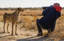 fotonomaden-markus-gepard
