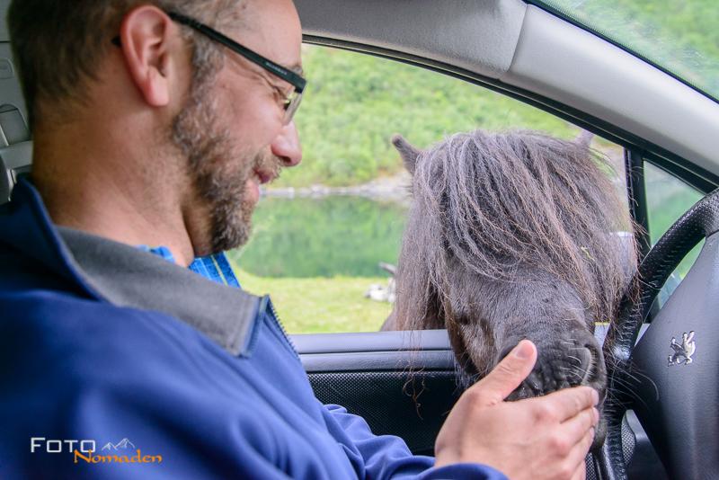 Fotonomaden nach Norwegen Auto Pferd