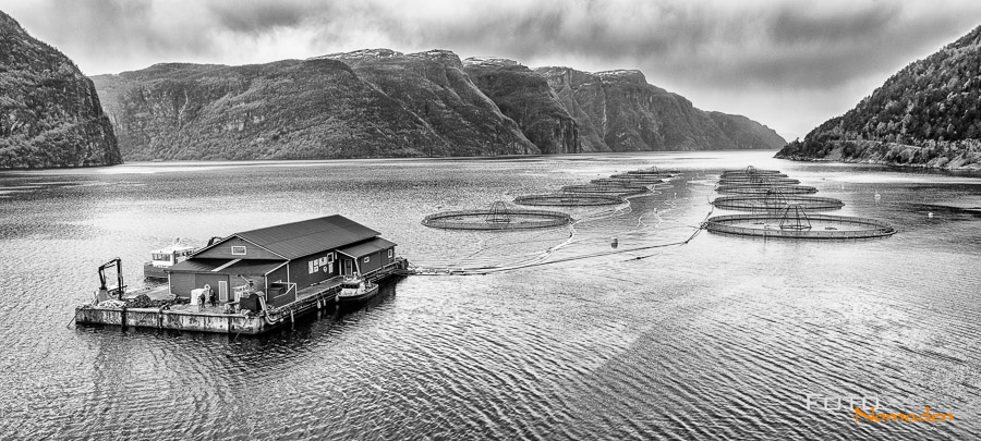 Fischzucht in Norwegen