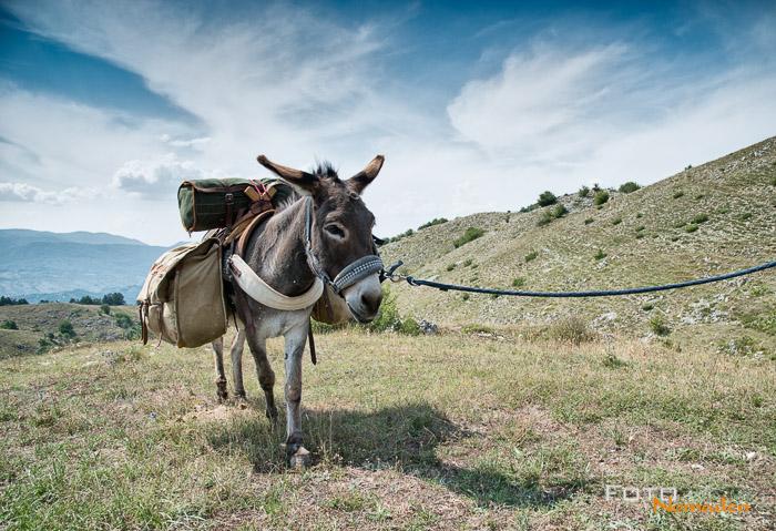 Eselwandern in den Abruzzen, Italien