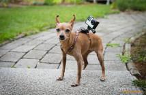 GoPro Hero4 Black Testbericht