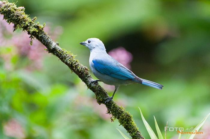 Costa Rica Nature Pavilion