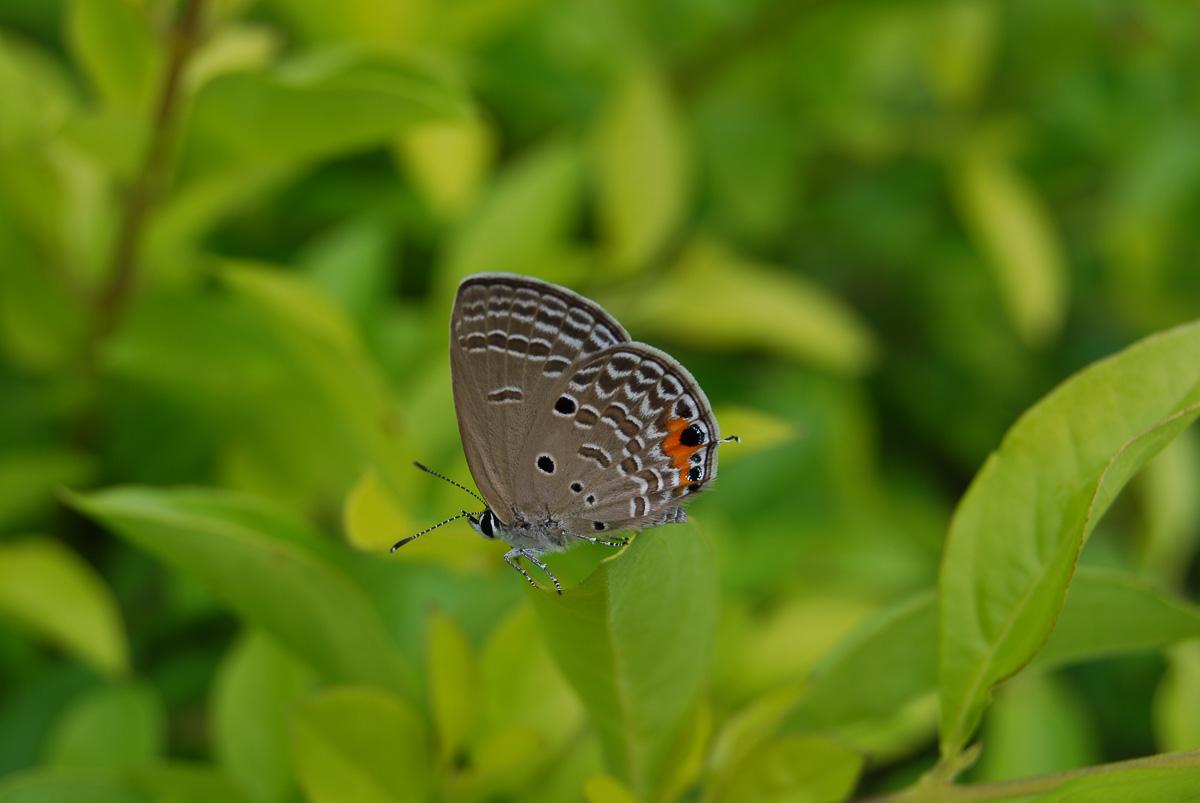 Bildanalyse Vorher-Foto Schmetterling Fotonomaden