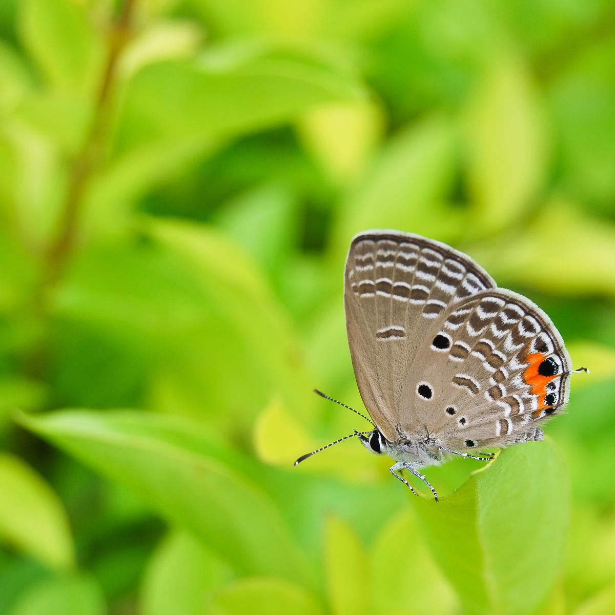 Fotonomaden Bildanalyse Schmetterling Endversion