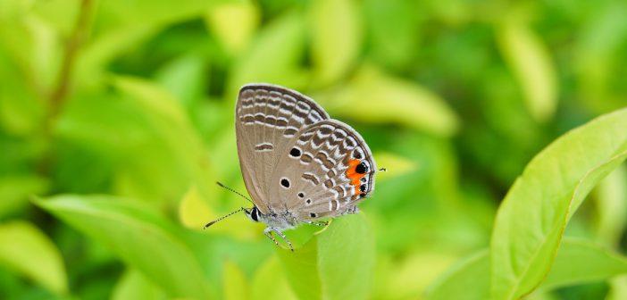 Bessere Nahaufnahmen machen: Bildanalyse Schmetterling