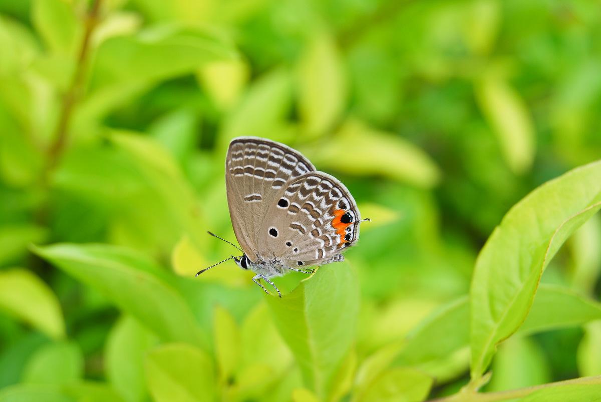 Bildanalyse Fotonomaden Schmetterling Belichtung korrigiert