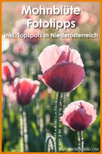 Mohnblüte in Niederösterreich
