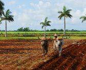 Foto-Analyse: Reisefotografie Kuba