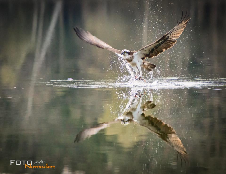 Fotonomaden Beispielfoto Adler 8000 ISO