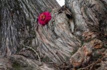 Baumstamm mit Blüte - Workshop Fotonomaden