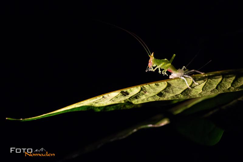 fotonomaden-nahaufnahmen-nacht-insekten