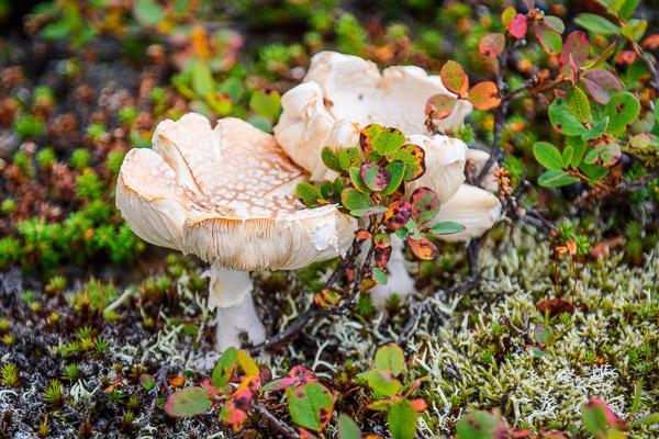 Pilz auf Flechtenboden