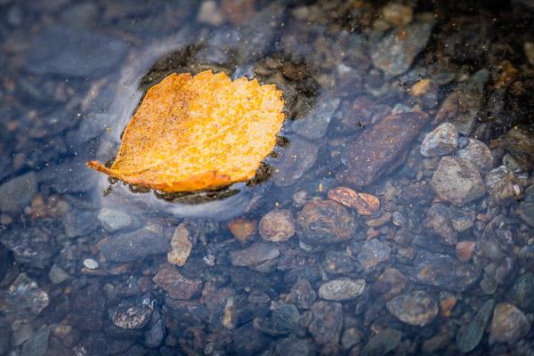 Nahaufnahme gelbes Blatt im Wasser