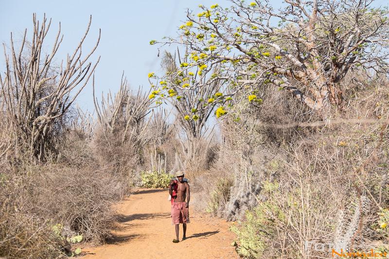 Madagaskar Reiseroute Fotonomaden Dornenwald