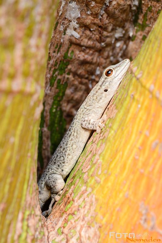 Madagaskar Reiseroute Fotonomaden Gecko