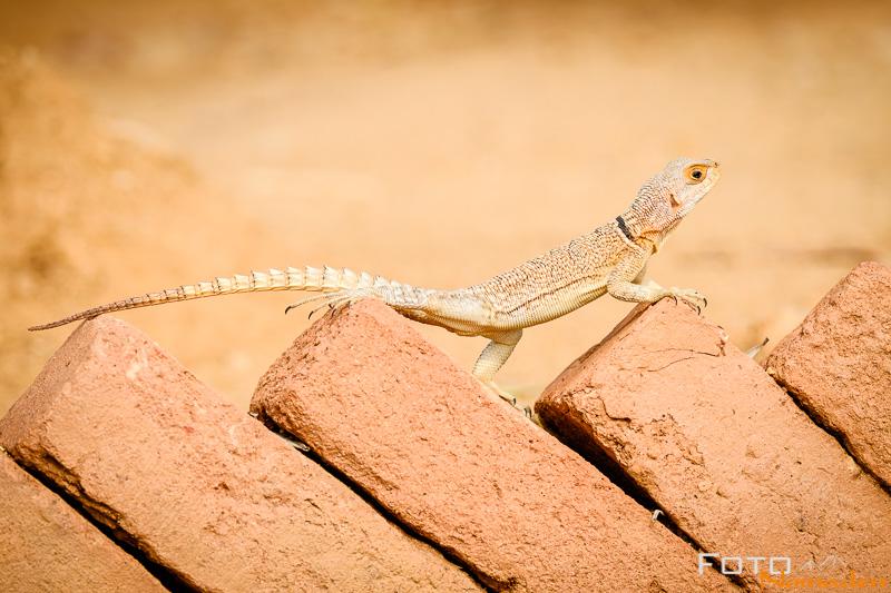 Madagaskar Reiseroute Fotonomaden Madagaskarleguan
