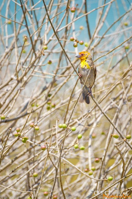 Madagaskar Reiseroute Fotonomaden Vogel