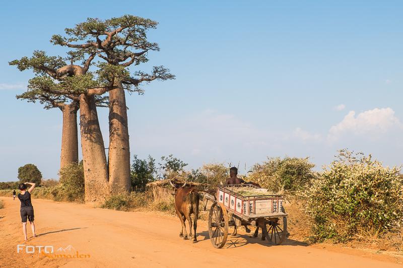 Madagaskar Reiseroute Fotonomaden Zebukarren