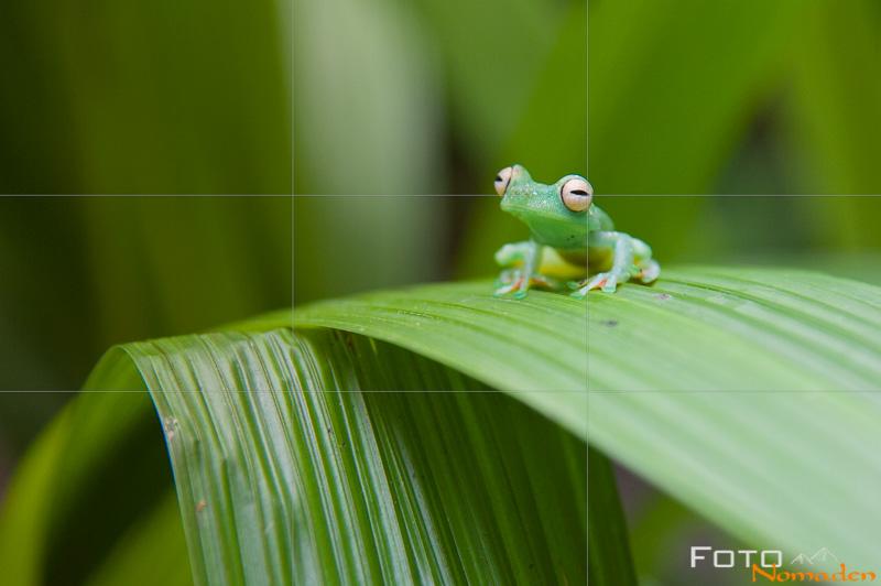fotonomaden-foto-motiv-drittelregel-frosch