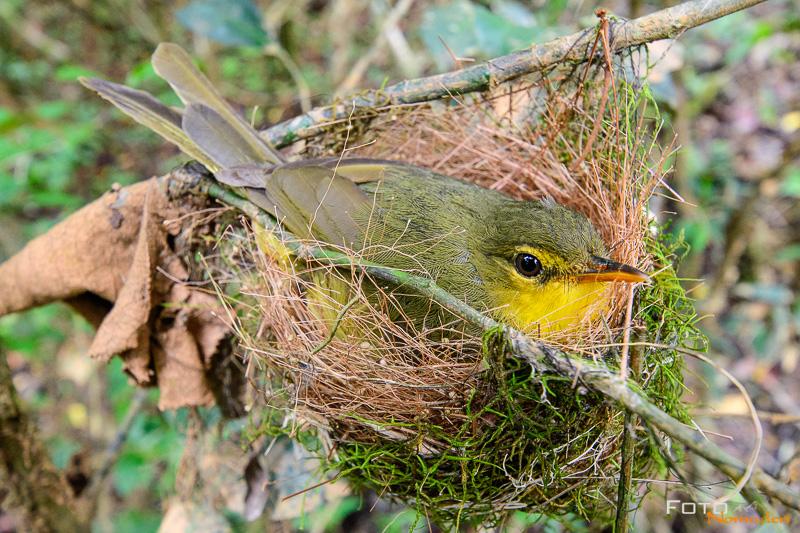 Fotonomaden Madagaskar Fotoreise Vogel