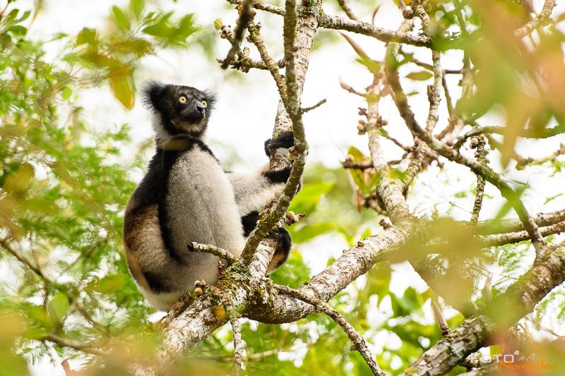 Fotonomaden Madagaskar Fotorreise Indri