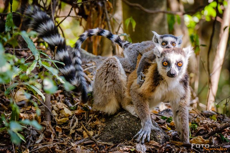 Fotonomaden Anja Community Reserve Madagaskar Fotoreise