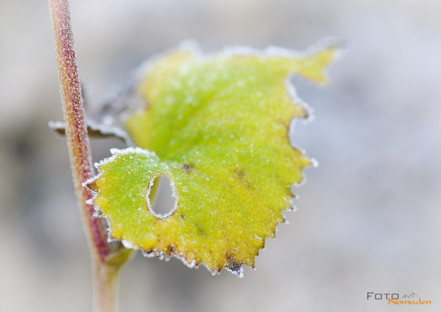 Fotonomaden Winterbilder Raureif