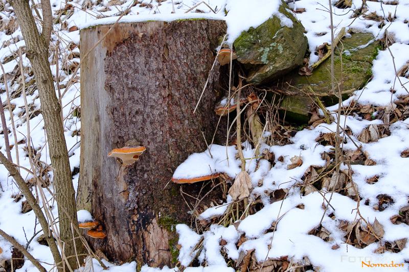 Fotonomaden-Winterbilder-Kompositionsfehler