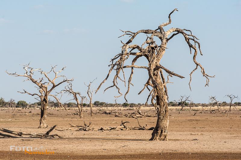 Fotonomaden Namibia Reiseroute Hardap Bäume