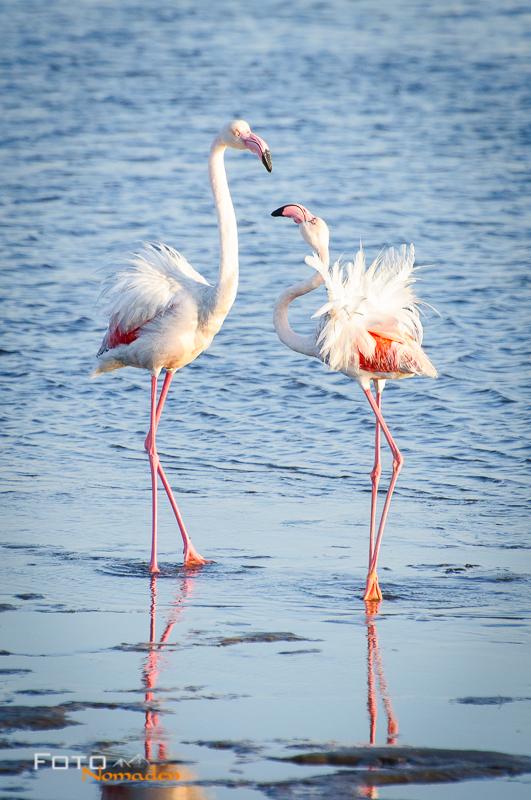 Fotonomaden Namibia Reiseroute Flamingos Walvis Bay
