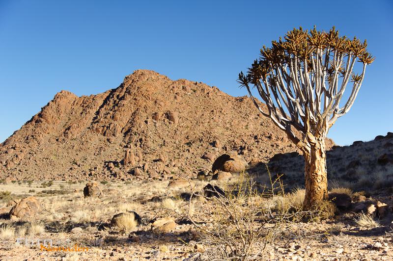 Fotonomaden Namibia Reiseroute Köcherbaum