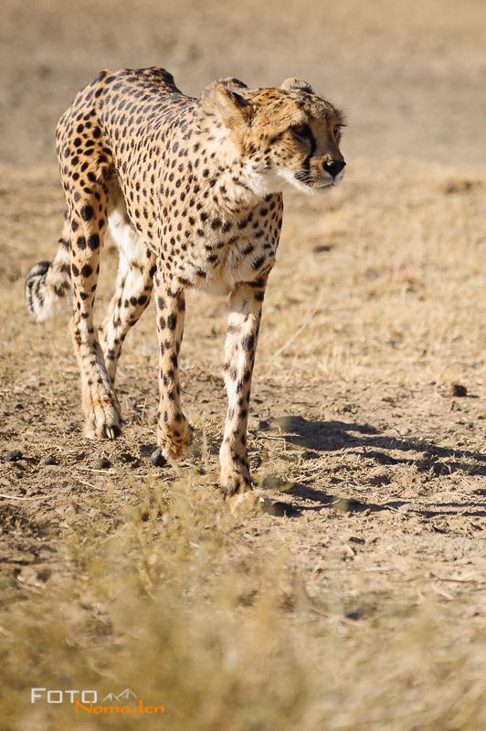 Fotonomaden Namibia Reiseroute Gepardin Naankuse