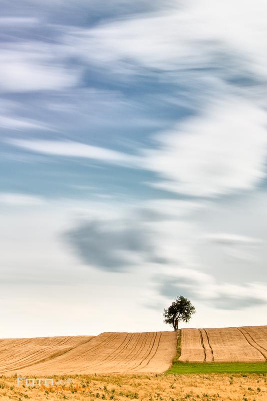 Fotonomaden Querformat oder Hochformat Baum