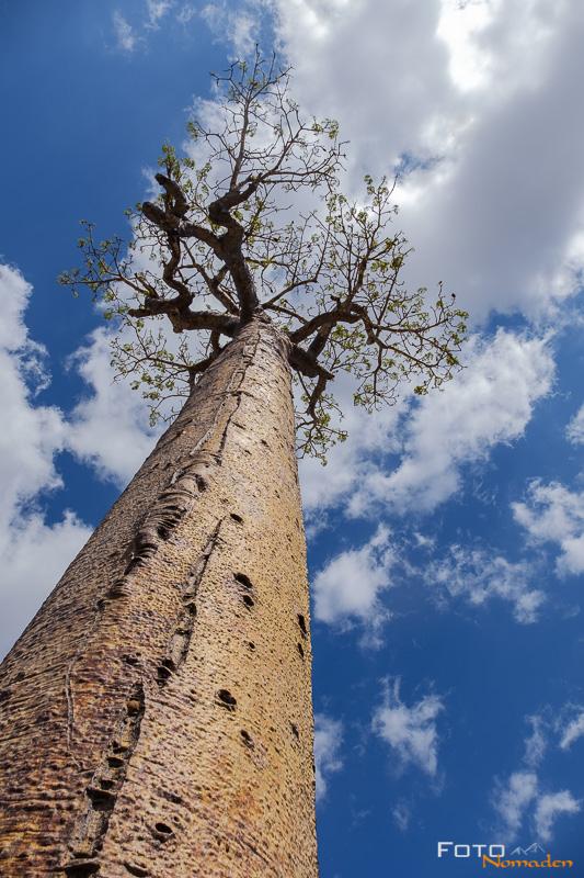 Fotonomaden Querformat oder Hochformat Baobab Madagaskar