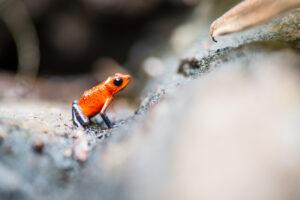 Tierfotografie Fotonomaden
