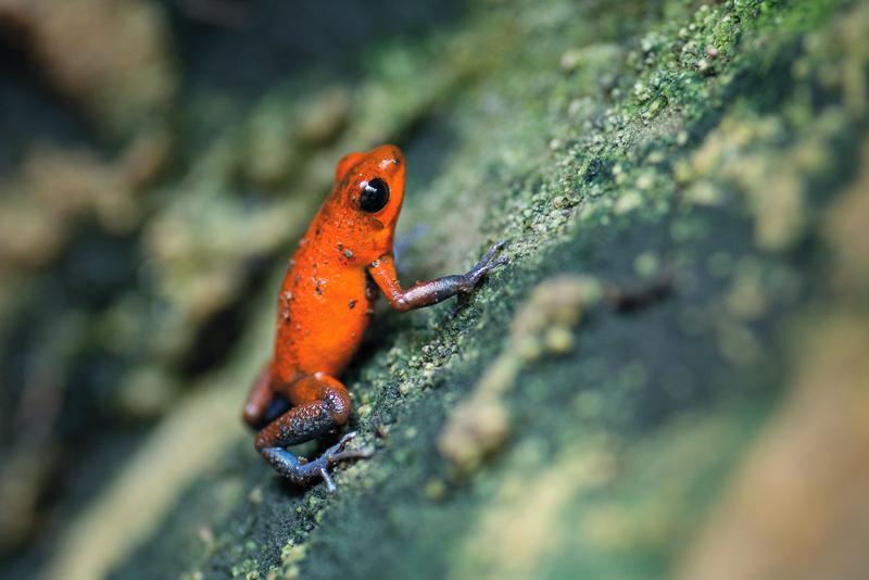 Tierfotografie Fotonomaden Frosch