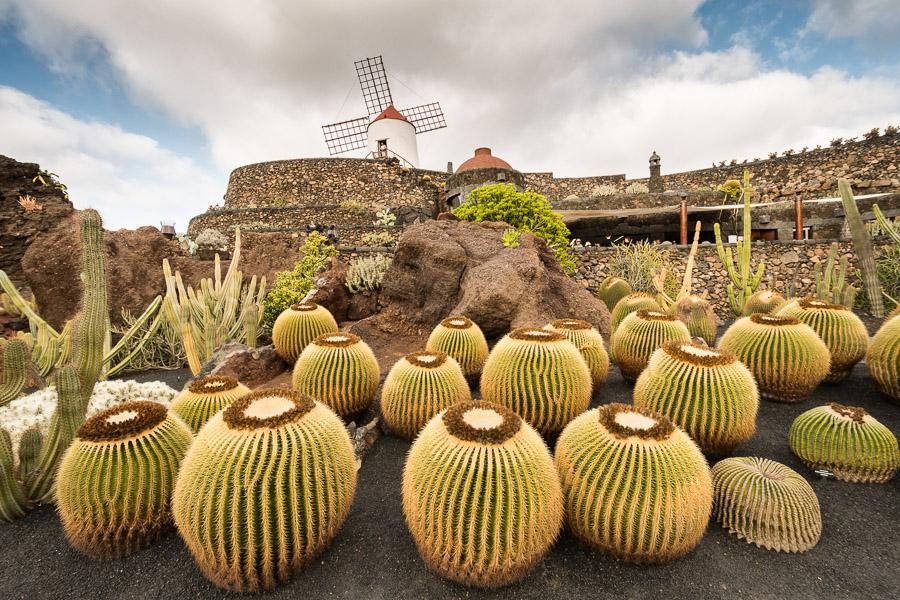 Jardin de Cactus von Manrique, Lanzarote