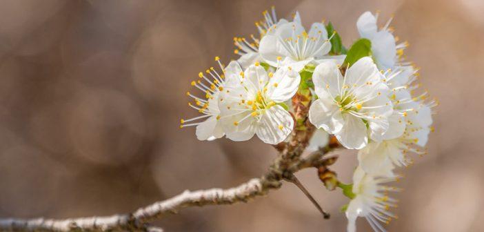 Frühlingsbilder – wie sie dir einfach gelingen