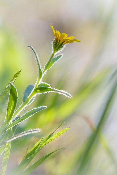 Frühlingsbilder - Nahaufnahme