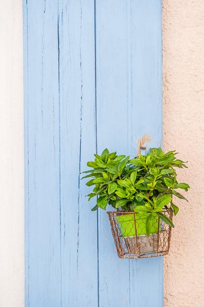 Camargue, Aigues-Mortes, Frankreich, Grüne Topfpflanze vor blauer Holzwand
