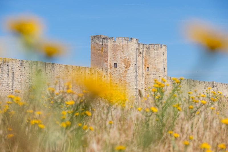 Camargue, Frankreich - Aigues Mortes Stadtmauer mit Türmen und gelben Blumen