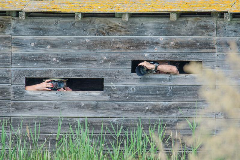 Camargue Flamingos Versteck für Fotografen im Parc Ornithologique de Pont de Gau