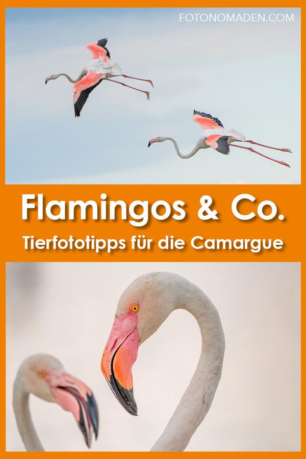 Flamingos Camargue fotografieren
