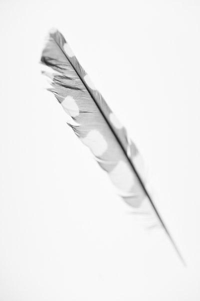 Schwarz/Weiß Foto