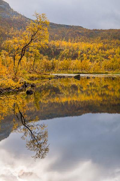 Herbstwald mit Spiegelung im Wasser während der Ruska in Lappland