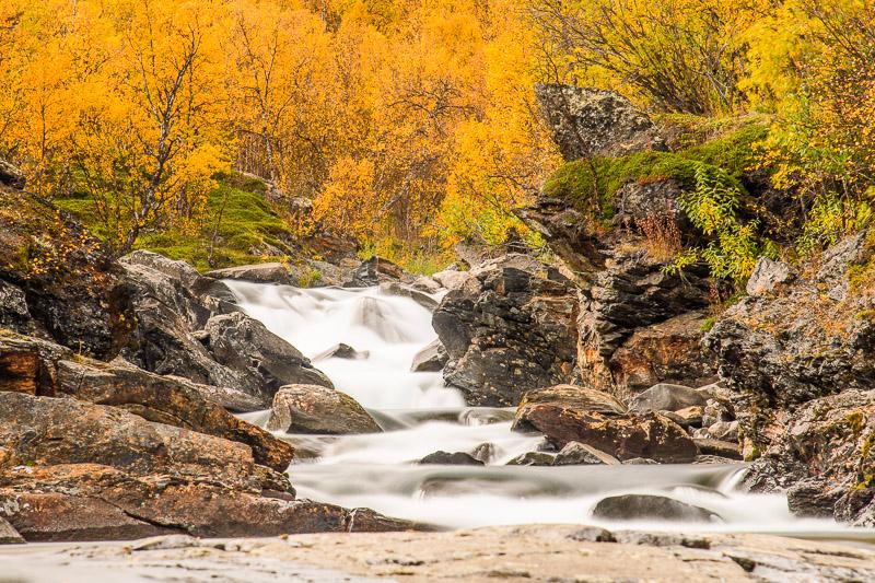 Herbstbild mit gelbem Wald während der Ruska in Lappland, Langzeitbelichtung