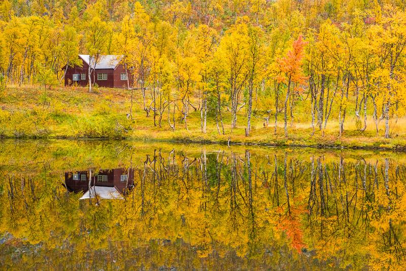 Hütte in gelbem Herbstwald zur Ruska in Lappland
